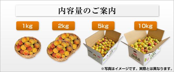 完熟梅サイズ比較