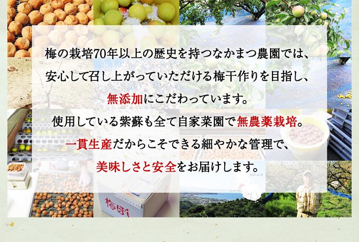 梅の栽培70年以上、なかまつ農園では安心の無添加にこだわり、紫蘇も全て自家菜園で無農薬栽培。一貫生産で美味しさと安全をお届けします。