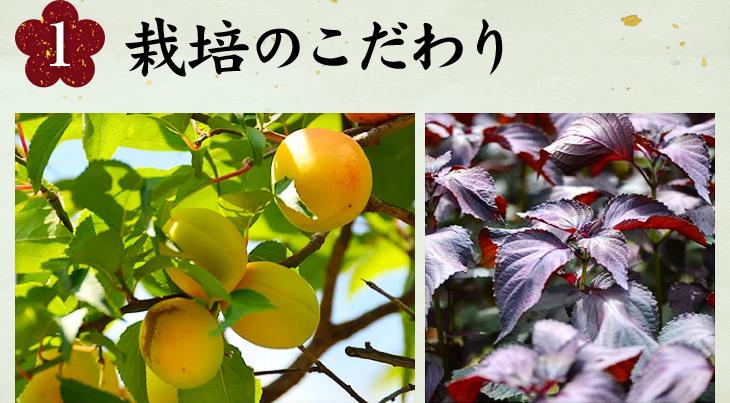 1.栽培のこだわり